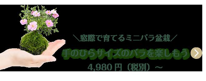 お部屋で簡単バラ栽培 手のひらサイズのミニバラ盆栽 4,980円(税別)〜